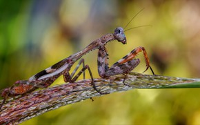 Picture macro, mantis, insect