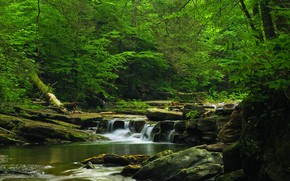 Picture Nature, Waterfall, Trees, River, Forest, Stones