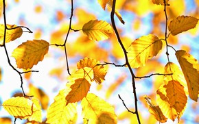 Picture autumn, light, branches, yellow, bokeh, autumn leaves