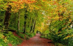 Picture road, autumn, forest, landscape, nature, beauty