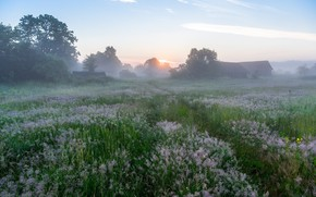 Picture flowers, fog, morning, village, meadow