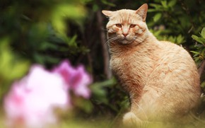 Picture cat, cat, look, flowers, nature, blur, garden, red, sitting, green background