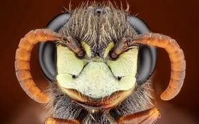 Picture macro, nature, insect, Пчелиный волк, Philanthus sp.