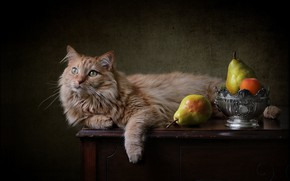 Picture cat, background, red, pear, cat