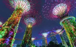 Picture Park, Singapore, illumination, Singapore, Gardens by the Bay, Gardens by the Bay, sverkhderzhava, Supertree Grove