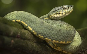 Picture nature, snake, green, reptile, cold-blooded animal