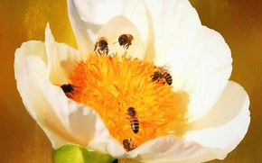 Picture flower, macro, insects, spring, art, bees, painting, picture