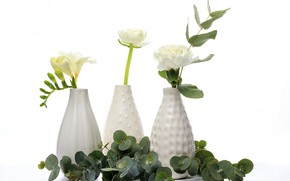 Picture flowers, white background, vases