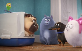 Picture cat, animals, dogs, rabbit, parrot, carrying, The secret life of Pets 2, The Secret Life …