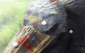 Picture paint, Raven, owlets