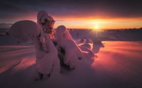 Picture winter, the sun, rays, snow, trees, sunset, nature, ate, Murmansk oblast, Rev Alex, Alex Revs, …