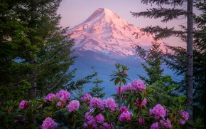 Picture forest, flowers, mountains, mountain