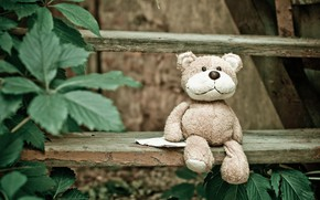 Picture leaves, toy, bear, bear, ladder, stage, Teddy