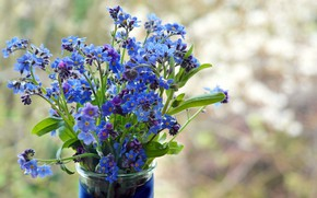 Picture flowers, vase, forget-me-nots