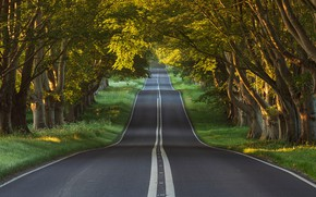 Picture road, forest, trees, England, Dorset, Blandford Forum
