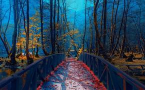 Picture autumn, bridge, Park, river, foliage, Bosnia, Mevludin Sejmenovic