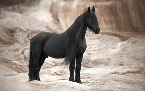 Picture horse, horse, mane, crow