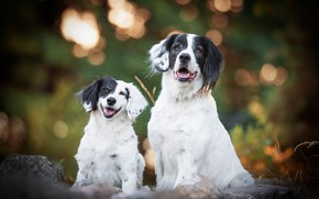 Picture dogs, smile, background, dog, baby, pair, puppy, mom, bokeh, black and white, two dogs