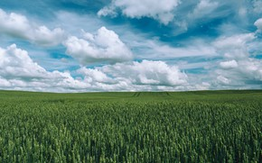 Picture Nature, Clouds, Field, Grass, Nature, Clouds, Grass, Green, Field, Farm, Harvest, Crop, Growth, Cropland, Jahoo …