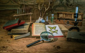 Picture butterfly, table, books, skull, horns, still life, bulb, magnifier, items, microscope, botany, magnifying glass, a …