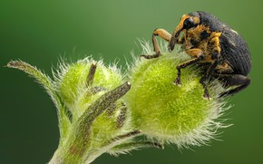 Picture macro, green, background, plant, beetle, insect, bug, weevil