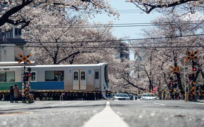 Picture The city, Spring, Sakura, Japan, Train, Railroad, Flowering, Moving
