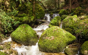 Picture greens, forest, leaves, trees, stream, stones, moss, Switzerland, Train