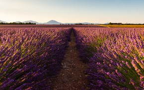 Picture field, summer, the sky, light, flowers, mountains, nature, hills, France, path, a lot, lavender, lilac, …