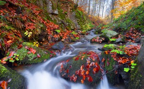 Picture autumn, forest, leaves, stream, stones, rocks, shore, for, foliage, waterfall, moss, red, river, stones, autumn …