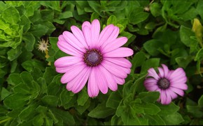 Picture Flowers, Purple flowers, Purple flowers