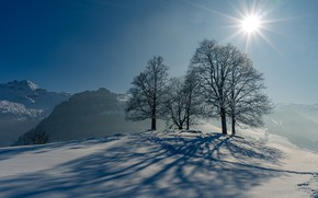 Picture winter, the sun, snow, trees, traces