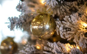Picture winter, frost, branches, holiday, Shine, ball, ball, Christmas, New year, tree, gold, gold plated, garland, …