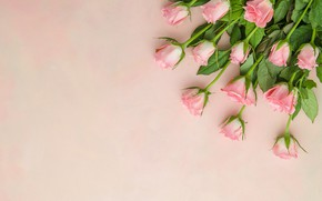 Picture background, pink, roses, bouquet, pink, buds
