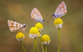 Picture butterfly, trio, flowers