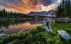 Picture forest, sunset, flowers, mountains, rocks, shore, Wyoming, USA, pond