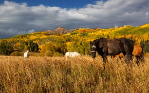 Picture autumn, forest, mountains, nature, horses, horse, pasture, grazing