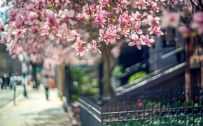 Picture light, flowers, branches, the city, people, mood, street, the fence, beauty, blur, spring, the sidewalk, …