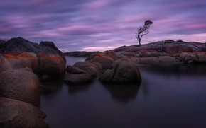 Picture tree, twilight, boulders