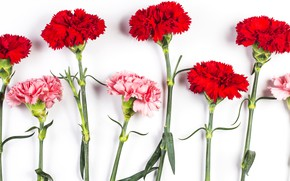Picture background, Flowers, clove
