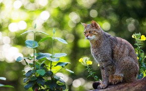 Picture cat, summer, cat, look, face, leaves, light, flowers, nature, pose, glare, grey, background, plants, sitting, …
