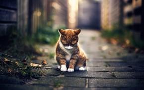 Picture autumn, cat, bokeh