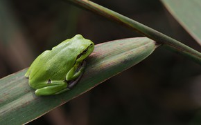 Picture sheet, frog, green