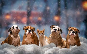 Wallpaper winter, cat, dogs, look, snow, trees, the city, lights, pose, comfort, kitty, mood, transport, street, ...