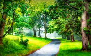 Picture road, greens, forest, summer, asphalt, branches, fog, Park, trunks, glade, foliage, morning, haze, alley, path, …