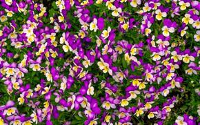 Picture grass, flowers, background, purple, summer, grass, flowers, purple