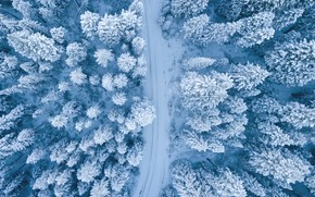 Picture winter, road, forest, snow, trees, in the snow, ate, the view from the top, Christmas …
