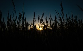 Picture Sunset, The sun, Nature, The evening, Grass, Summer, Beauty, Nature, Feelings, Chic, Romance, Feeling, Night