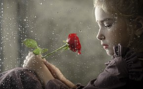 Picture rose, window, girl