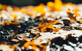 Picture autumn, light, branches, yellow, falling leaves, bokeh, oak, autumn leaves
