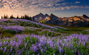 Picture the sky, flowers, mountains, the evening, meadow, Doug Shearer